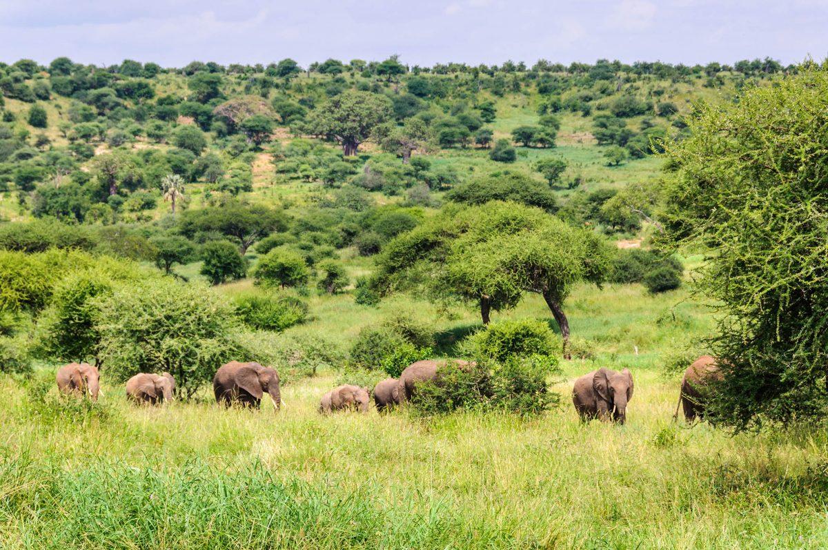 Voyage-de-luxe-Tanzanie-savane