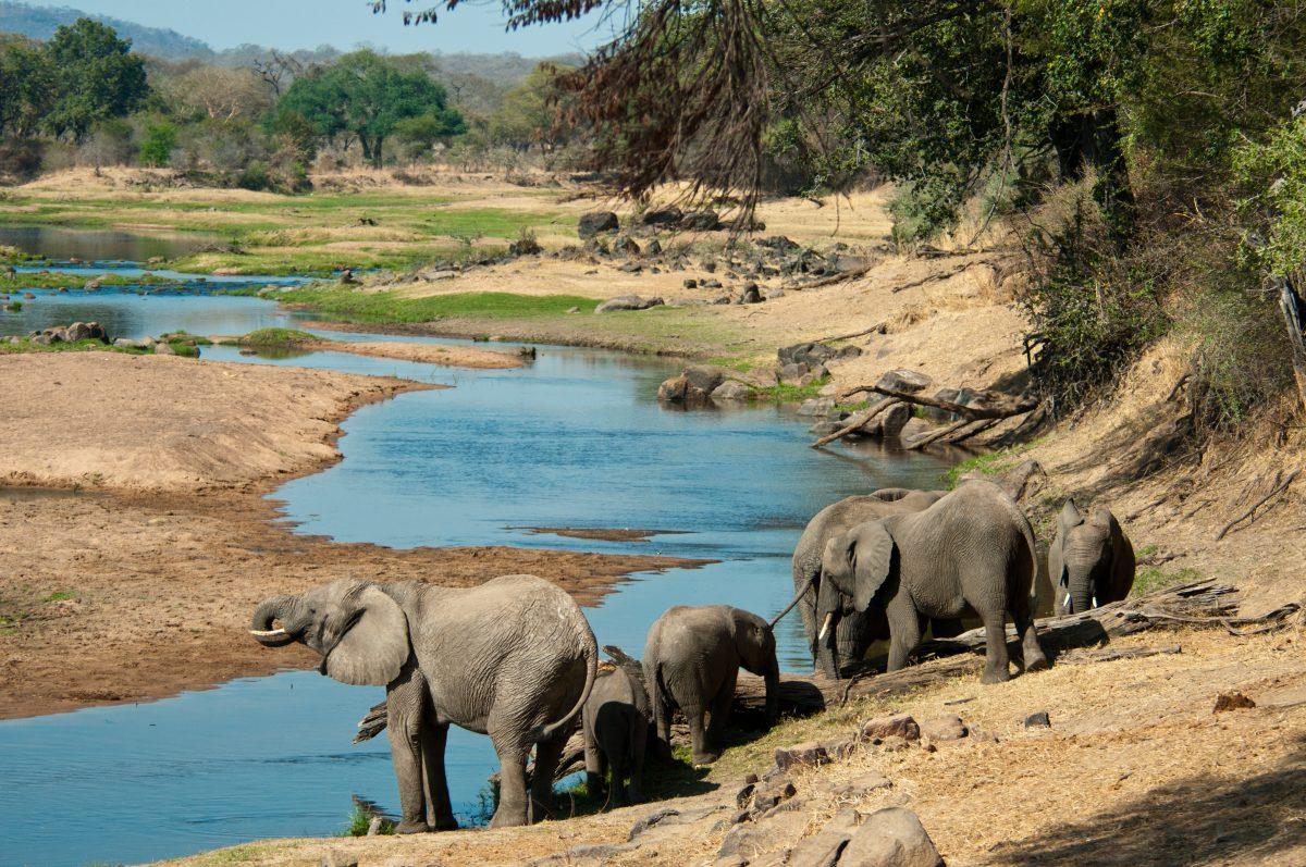 elephants-ruaha-pemba-tanzanie