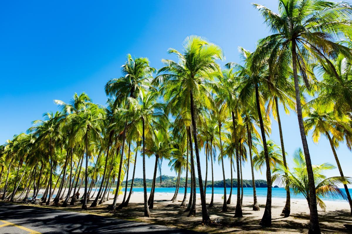 voyage-sur-mesure-costa-rica-palmiers