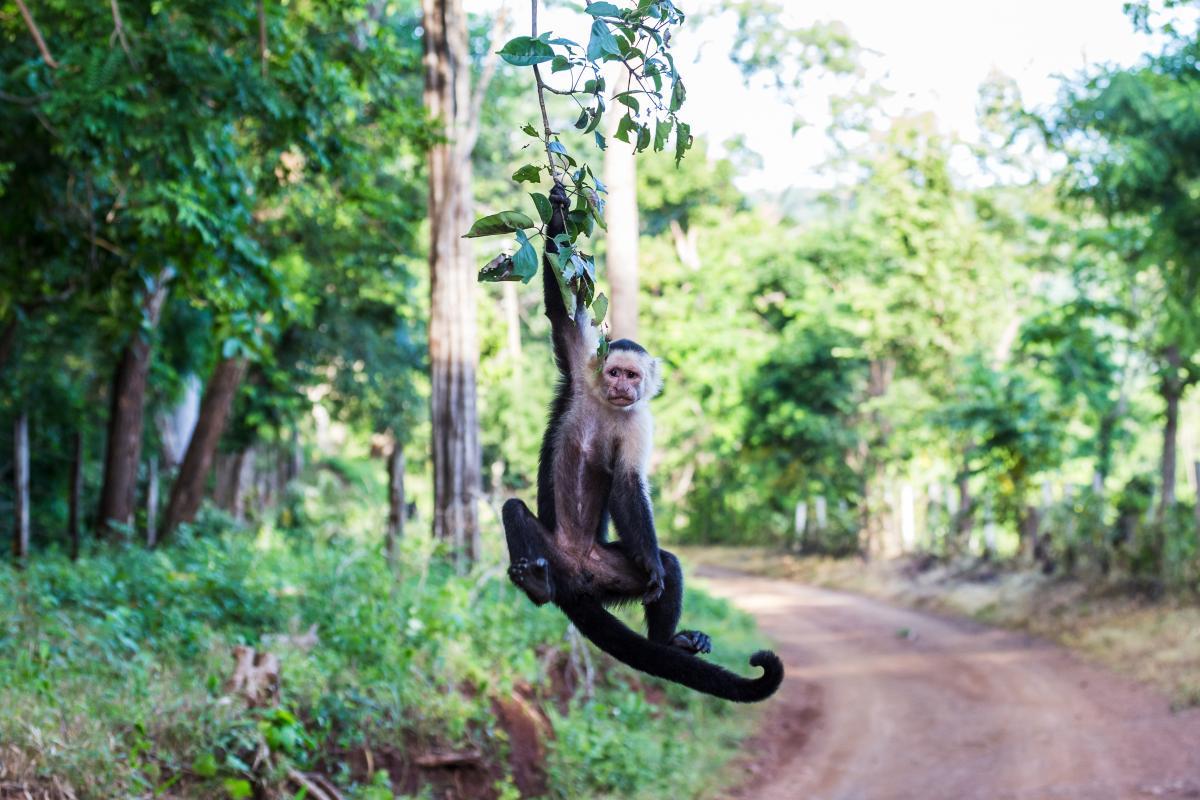 voyage-sur-mesure-costa-rica-singe