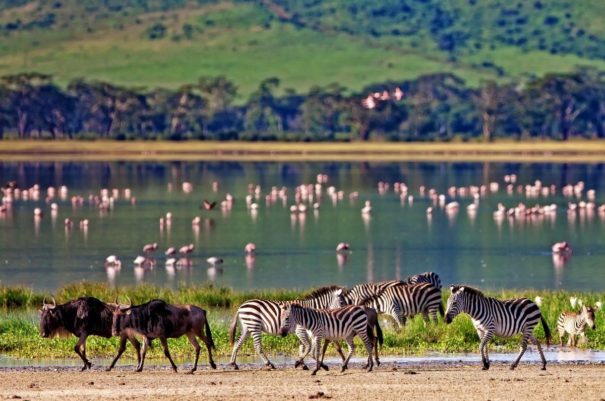 voyage-de-luxe-Tanzanie-cheetah