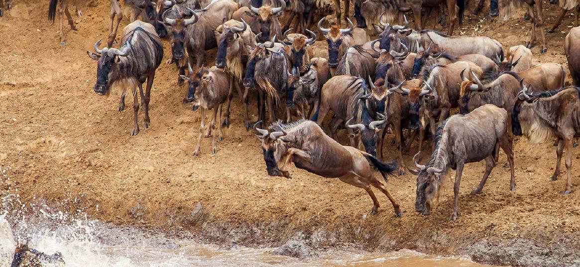 voyage-de-luxe-Tanzanie-masai-mara