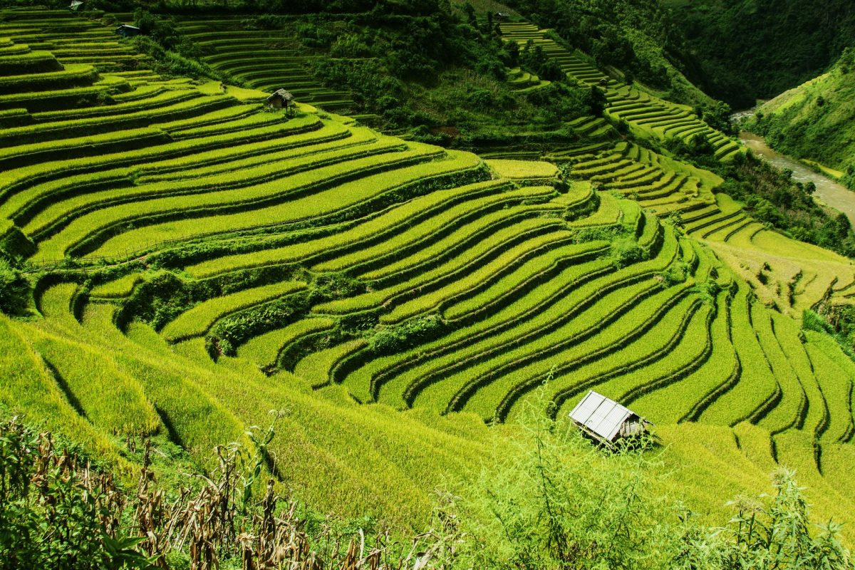 voyage-sur-mesure-vietnam-rizières