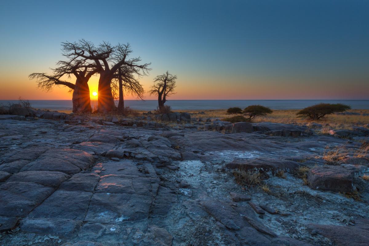 voyage-sur-mesure-au-Botswana-baobab