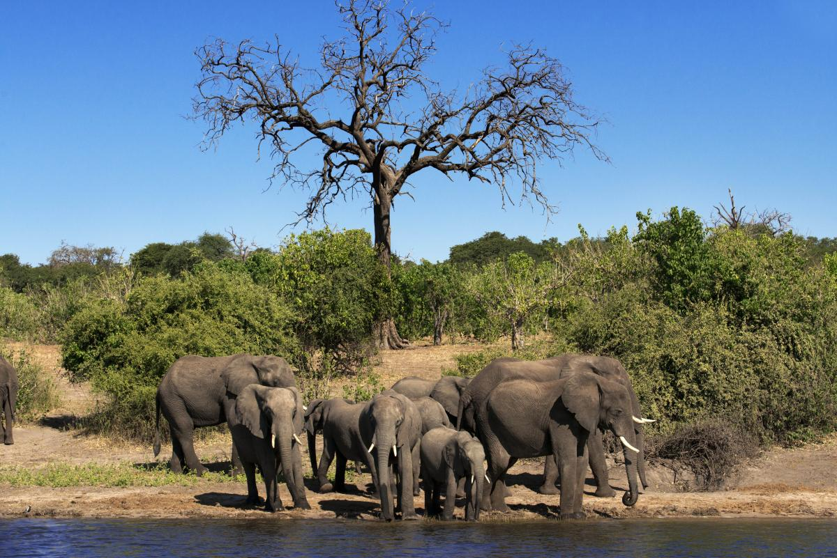 voyage-sur-mesure-au-Botswana-chutes-groupe-éléphants