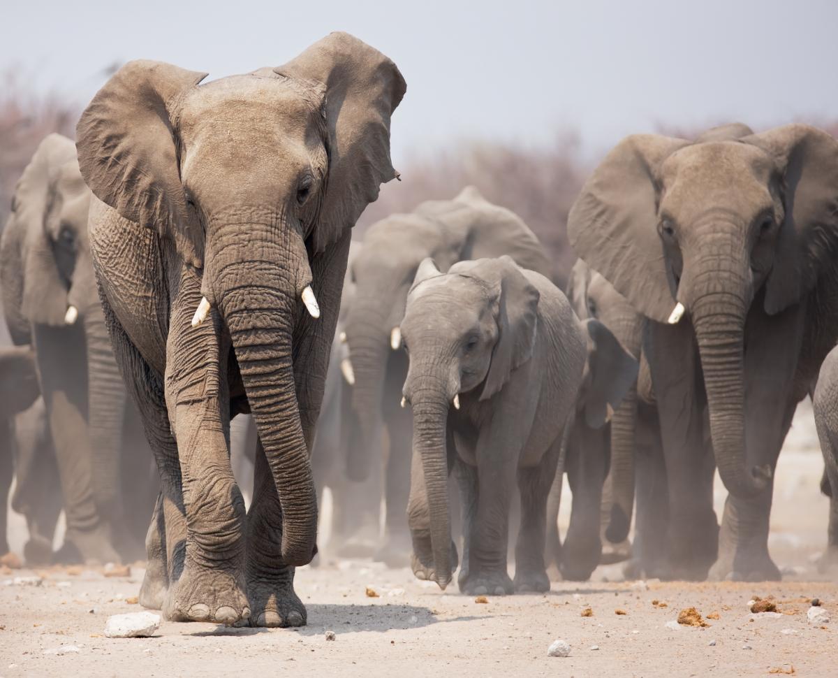 voyage-de-luxe-namibie-elephants