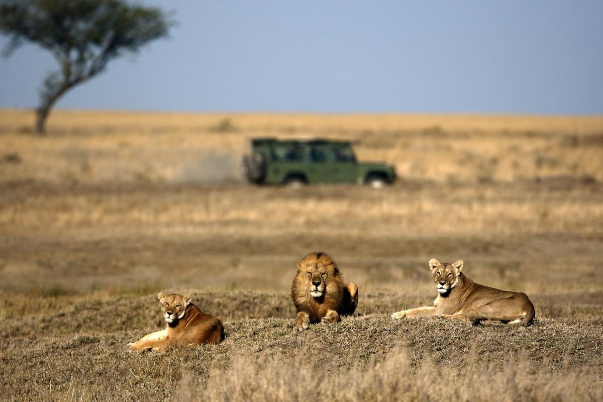 voyage-sur-mesure-au-Botswana-faune