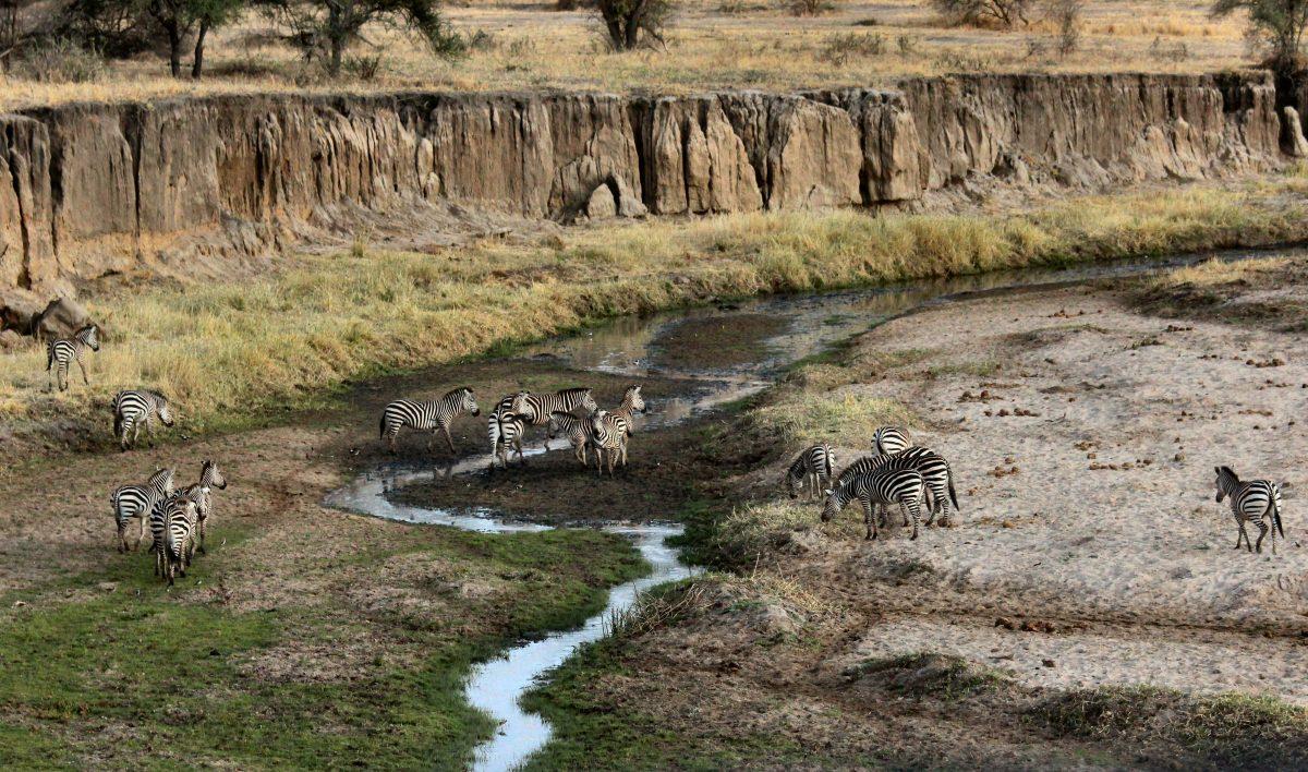 Voyage-de-luxe-Tanzanie-safari
