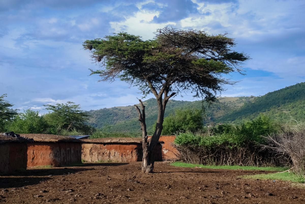 Voyage-de-luxe-Tanzanie-arbre