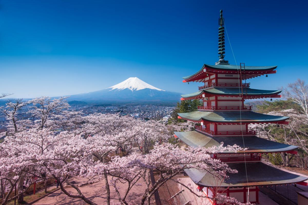 voyage-sur-mesure-au-japon-sakura