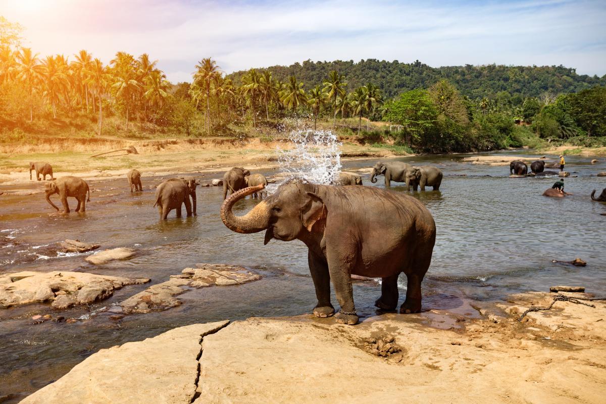 voyage-de-luxe-sri-lanka-elephants