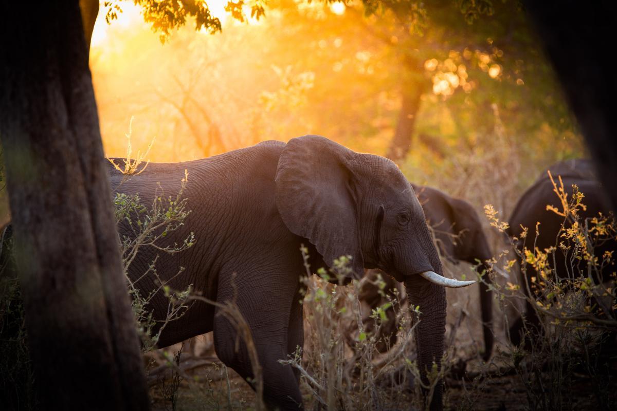 Voyage-sur-mesure-au-Botswana-elephants