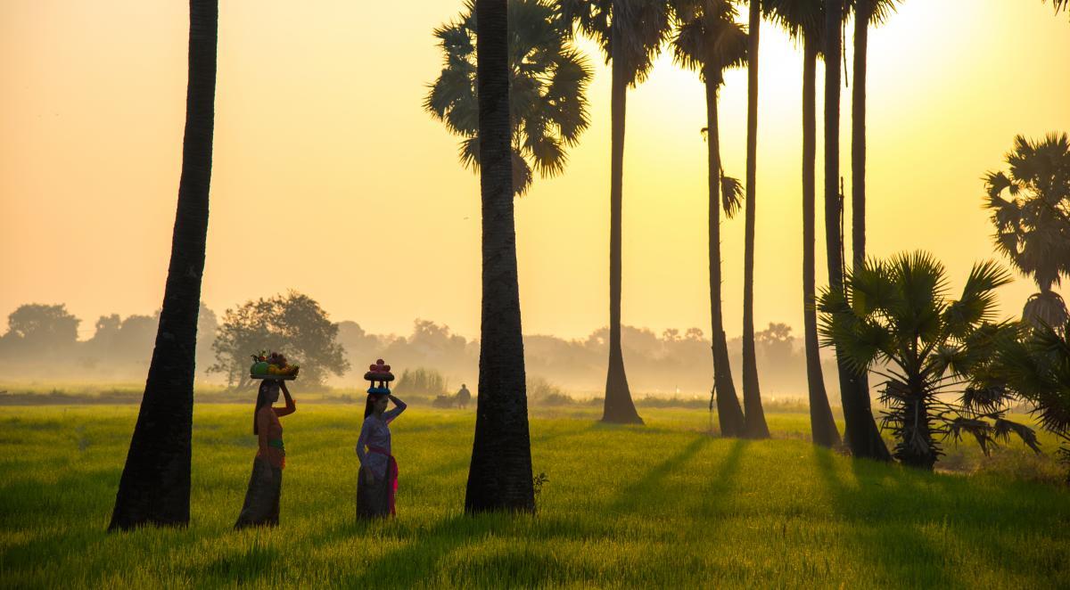 voyage-sur-mesure-à-bali-et-en-indonésie-rizière