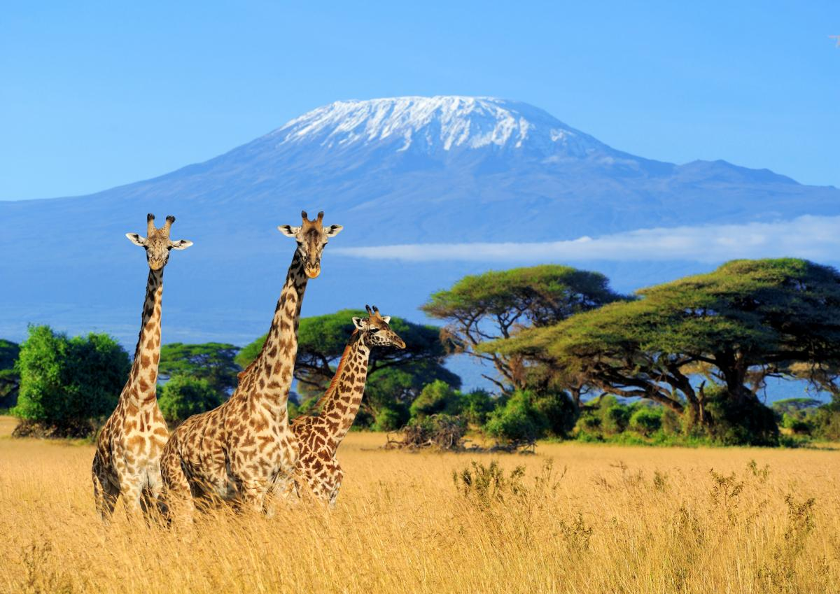 Safari-sur-mesure-au-kenya-girafes
