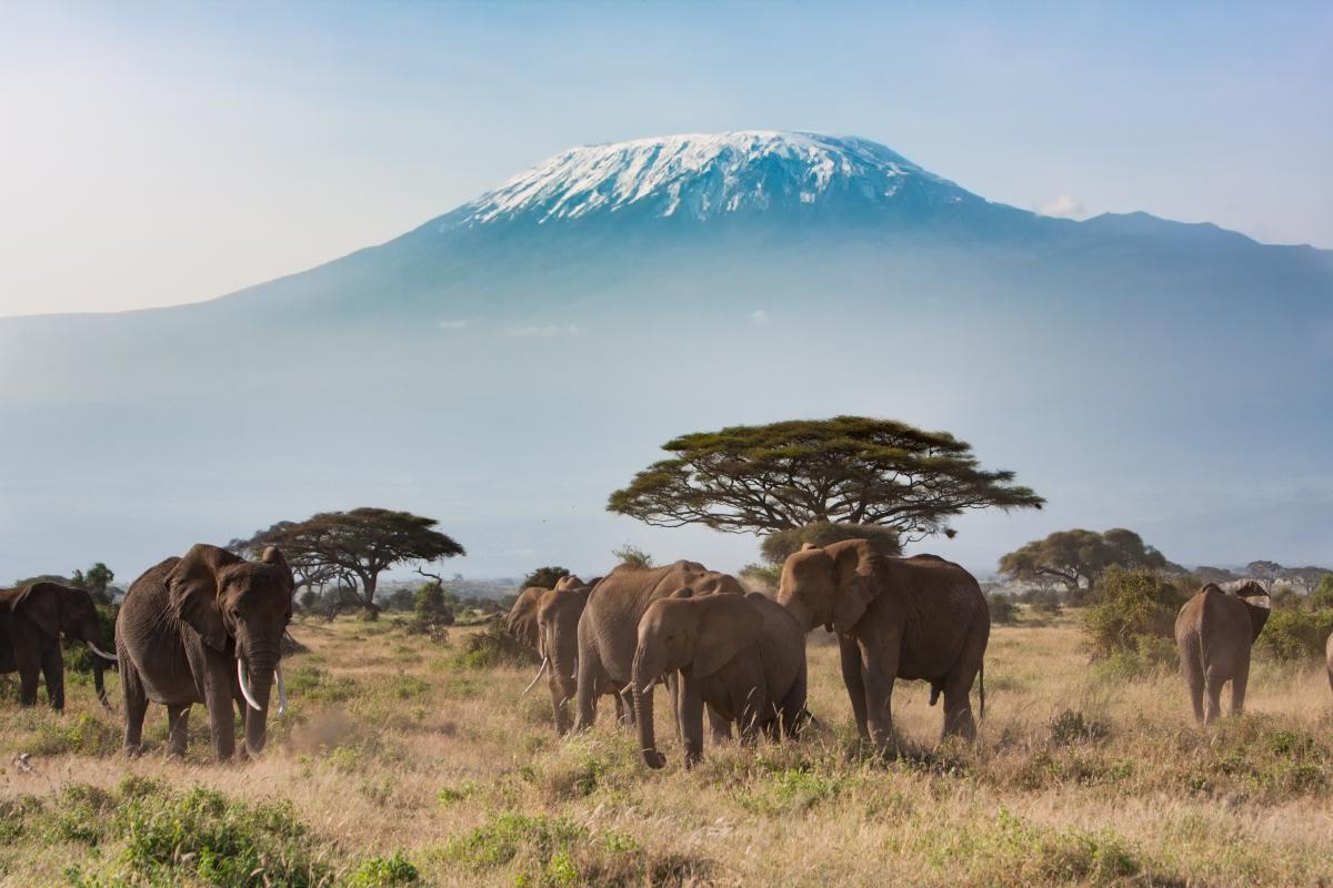 Voyage-de-luxe-Tanzanie-elephants
