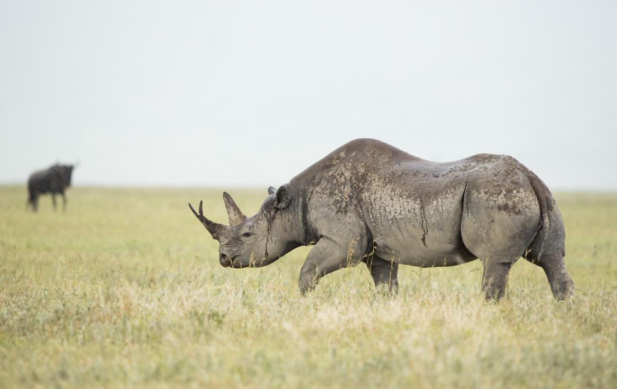 Voyage-de-luxe-Tanzanie-rhinocéros