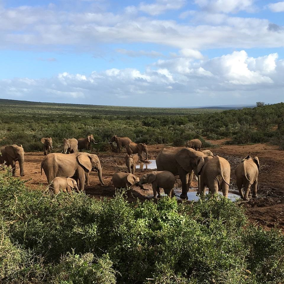 elephant-afrique-du-sud